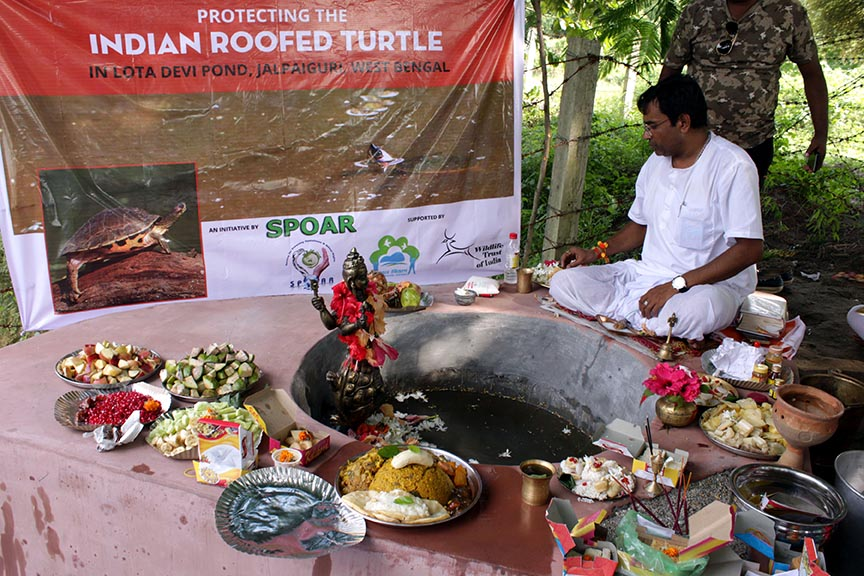 Protection of Indian Roofed Turtle (Pangshura tecta)